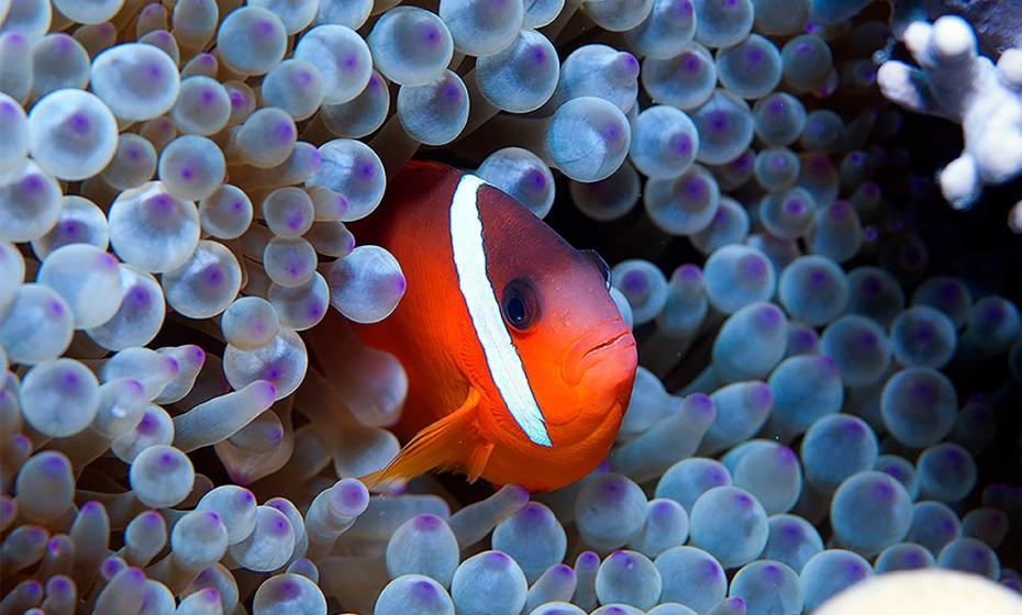 Da Indonésia à Amazônia – Expedições de Jean-Michel Cousteau